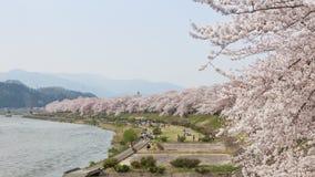 Akita, Giappone - aprile 27,2014: Sakura in riva del fiume di Kikonai Fotografia Stock Libera da Diritti