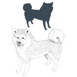 Akita Inu-Hundeschattenbild und -skizze Lizenzfreies Stockfoto