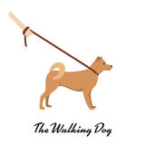 Akita Inu with a leash Royalty Free Stock Image