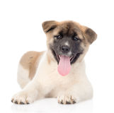 Akita inu puppy dog lyiing in front and looking at camera. isolated. On white Royalty Free Stock Photo