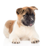 Akita inu puppy dog lying in front. isolated on white background.  Stock Image