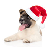 Akita inu puppy dog in red santa hat looking at camera. isolated. On white background Royalty Free Stock Photo