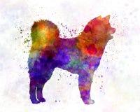 Akita Inu 01 in watercolor Royalty Free Stock Image