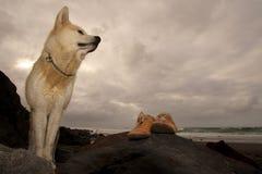 Akita Inu y zapatos en una playa Fotografía de archivo libre de regalías