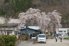 Akita, Japón - abril 27,2014: Sakura en distrito del samurai Fotos de archivo libres de regalías