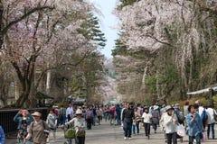 Akita, Japón - abril 27,2014: Sakura en distrito del samurai foto de archivo