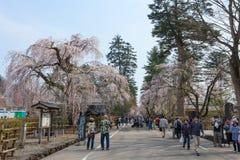 Akita, Japón - abril 27,2014: Sakura en distrito del samurai fotografía de archivo libre de regalías
