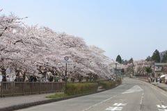 Akita Japonia, Kwiecień, - 27,2014: Sakura w Kikonai brzeg rzeki Zdjęcie Stock