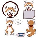 Akita psa ikony wektorowy set ilustracji
