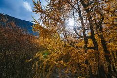 Akkem谷在阿尔泰山自然公园 免版税库存图片