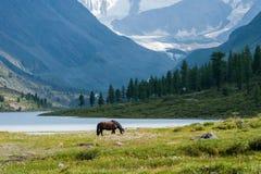 Akkem Lake, Belukha, horse. Trekking in the Altai Mountains Royalty Free Stock Image