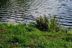 Aklimatyzaci são Paulo Brazil parkowy mały czarny kot obrazy stock