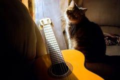 Akoestische gitaar en kat die de camera, in de schaduw, in de ruimte, huishobby bekijken royalty-vrije stock afbeeldingen