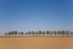 akra świeżo przeorzący rzędu drzewa Fotografia Stock
