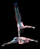 akrobata Zdjęcia Royalty Free