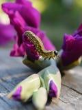 Akrobatyczny Caterpillar obraz royalty free