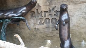 Akron Zoo Otter Exhibit Stock Images