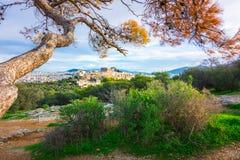 Akropol med Parthenon Sikt till och med en ram med gröna växter, träd, forntida marmor och cityscape, Aten royaltyfria bilder