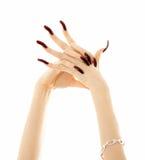 akrylowe paznokcie długie ręce Obrazy Stock