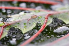 Aksamitowa houseplant Obraz Stock