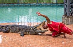 aktören sätter hans huvud i krokodilmunnen som en del av showen i Beung Boraphet Royaltyfria Foton