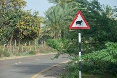 Akta sig av får som korsar tecknet på kurvan av en gata royaltyfria foton