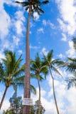 Akta sig av fallande kokosnöttecken Royaltyfri Bild
