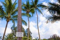 Akta sig av fallande kokosnöttecken Fotografering för Bildbyråer