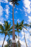 Akta sig av fallande kokosnöttecken Royaltyfri Fotografi