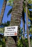 Akta sig av fallande kokosnötter med ett leende Fotografering för Bildbyråer