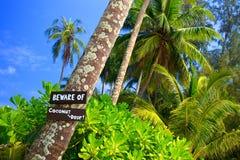 Akta sig av kokosnöt tappar Royaltyfria Foton