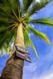 Akta sig av kokosnöt tappar Royaltyfri Fotografi