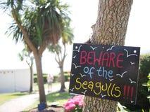 Akta sig av seagullsna Royaltyfri Foto