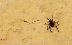 Akta sig av spindeln på väggen Arkivbild