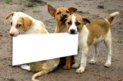 akta sig hundar Arkivbilder