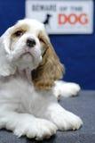 akta sig hunden Royaltyfria Bilder