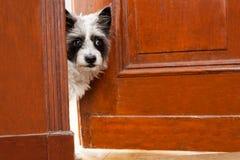 akta sig hunden royaltyfri fotografi