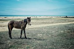 Seascape of the caspian sea with horses of the steppe. Aktau / Kazakhstan - APR 28 2011: seascape of the caspian sea with horses of the steppe stock photos