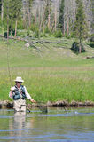 aktiv fisk som hoppar den netto pensionären till kvinnan Royaltyfri Bild