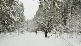 Aktiv man som flyttar sig efter hans fru, medan skida i vinterskog på fritid stock video