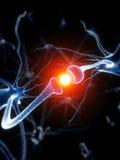 Aktiv neurone Arkivfoton