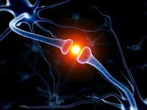 Aktiv neurone Arkivbild