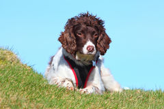 Aktiv utomhus- sund hund Arkivbilder