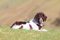 Aktiv utomhus- sund hund Arkivfoton
