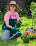 Aktiva höga kvinnor som arbetar i hennes trädgård Arkivfoton