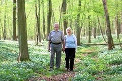 Aktiva höga par som fotvandrar i skogen Royaltyfri Fotografi