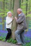 Aktive ältere Paare, die im Wald wandern Stockfoto