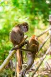 aktive Affen sitzen auf einem Zaun im Schatten eines Baums Stockbilder
