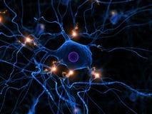Aktive Nervenzelle Stockfotos