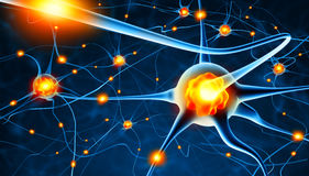 Aktive Nervenzellen Stockbild